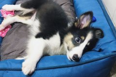 Talisker's First Day Home