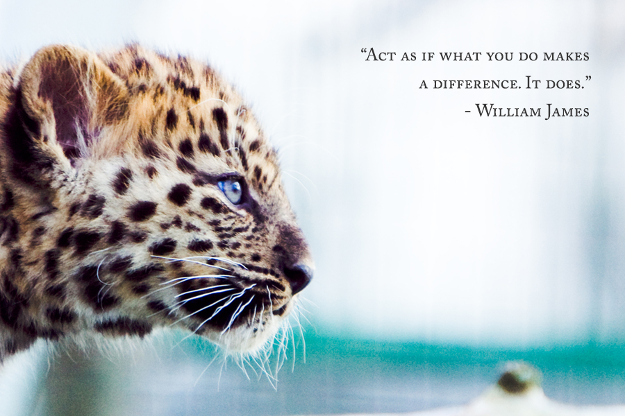 actasif_leopard_4x6
