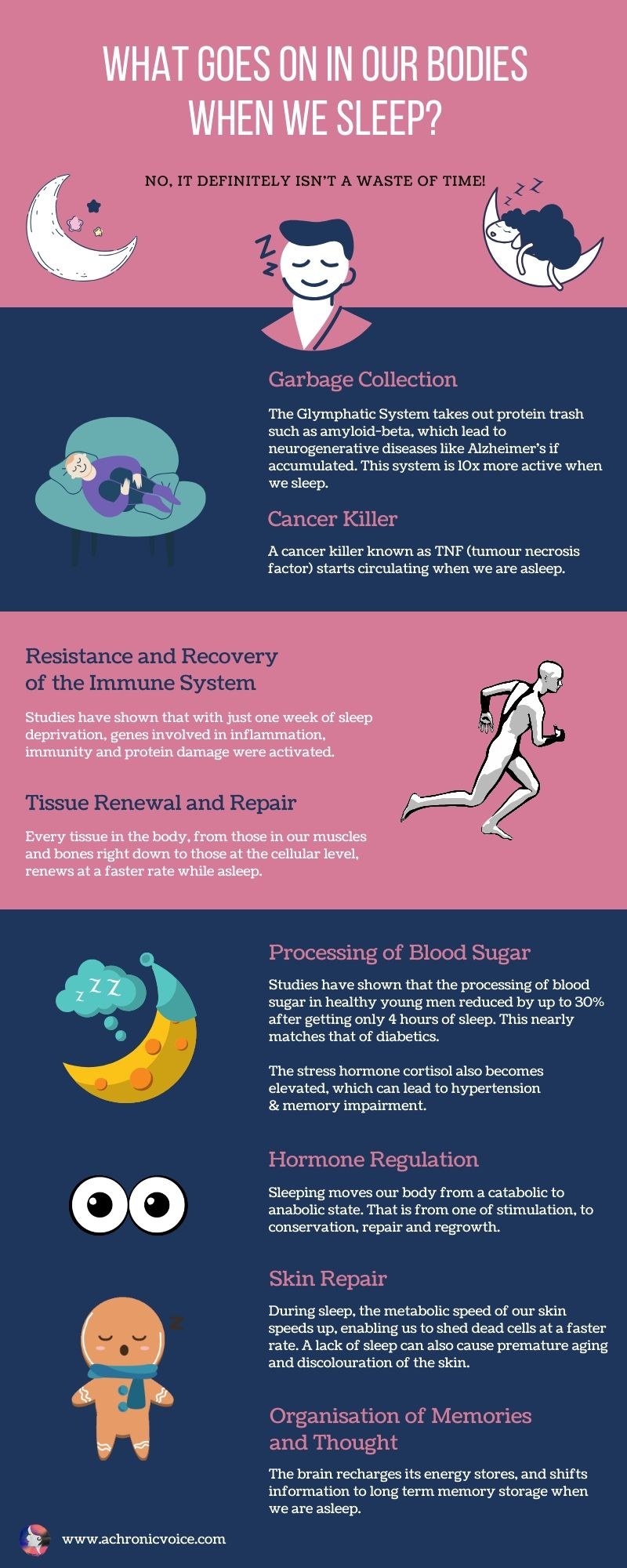 9 Things That Happen in Our Bodies When We Sleep Infographic