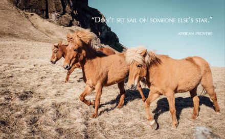 blog horses
