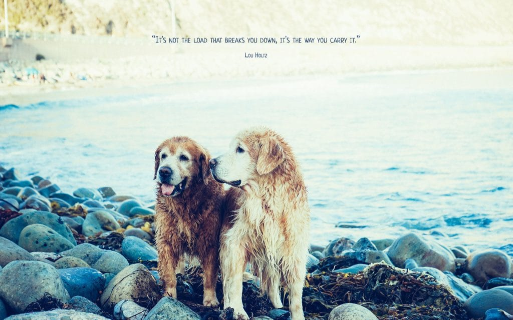 It's Not the Load Quote (Best Buds) | Desktop | A Chronic Voice
