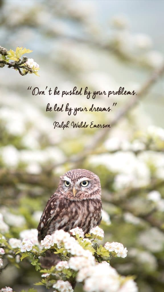 "Download Free Wallpapers on A Chronic Voice: ""Don't be pushed by your problems, be led by your dreams."" - Ralph Waldo Emerson"