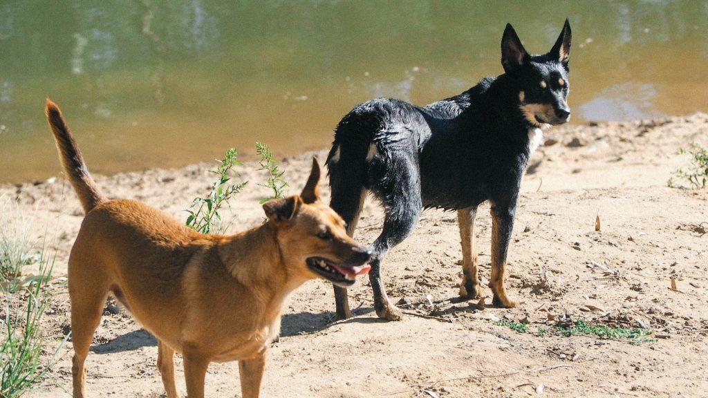Bree's beloved dogs