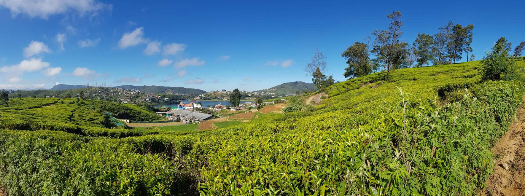 Beautiful Ella tea hills. | www.achronicvoice.com