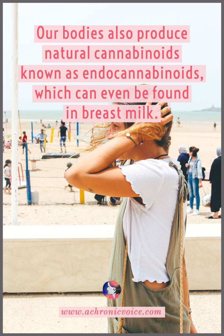 Endocannabinoids - Natural Cannabinoids Produced by Our Bodies