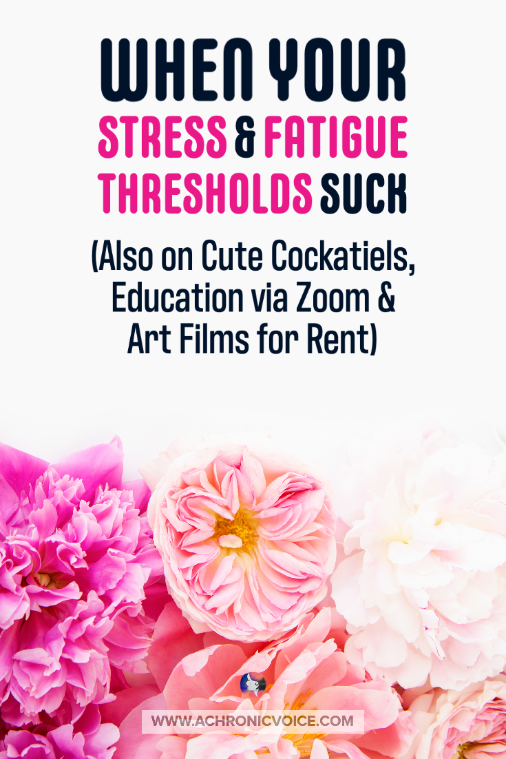 When Your Stress & Fatigue Thresholds Suck (Also on Cute Cockatiels, Education via Zoom & Art Films for Rent)