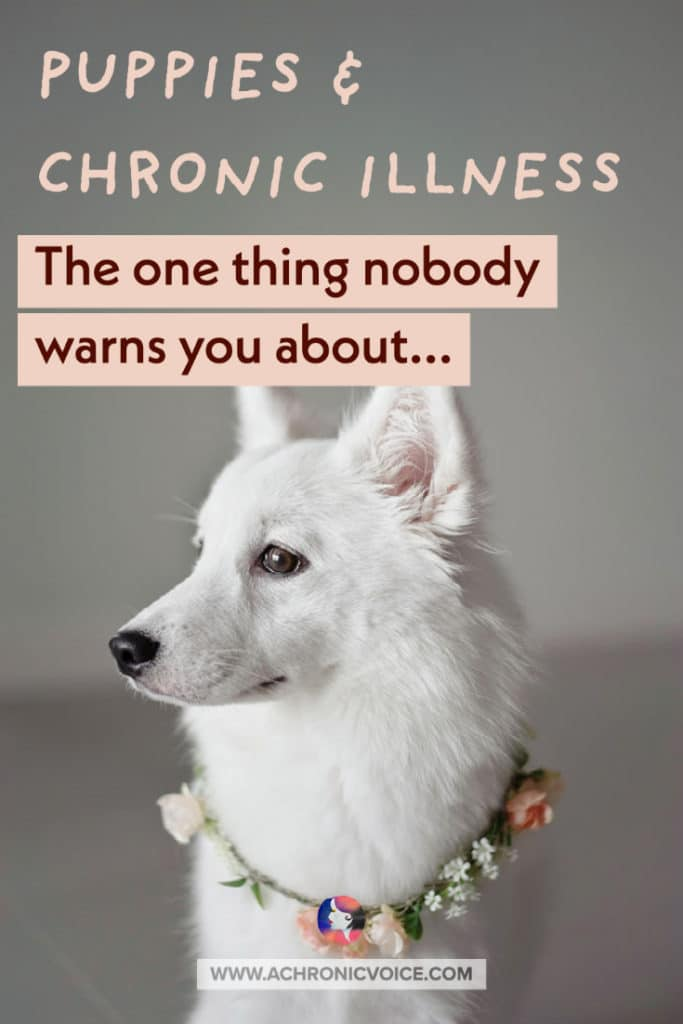 Puppies and Chronic Illness - The One Thing Nobody Warns You About