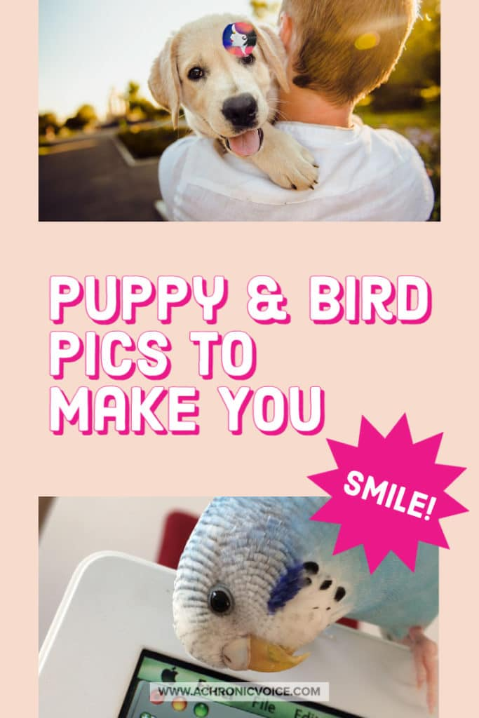 Puppy and Bird Pics to Make You Smile!